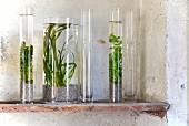 Miniaquarium - Wasserpflanzen im Glasvasen auf Ablage im Vintagelook