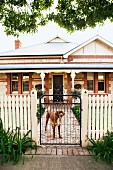 Dog standing behind white wooden fence with closed garden gate; brick house with veranda in background