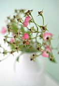 Dead wild roses in vase