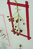 Picture frame made from washi tape around sprig of rose hips on wall