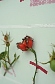 Sprig of rose hips stuck to pastel wall with washi tape
