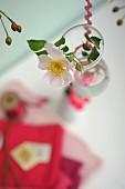 Flowering dog rose in small glass vase