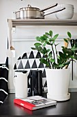 House plant in white pot and black and white thermos flasks on kitchen counter