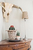 Potted cactus and succulent, one in wicker planter, next to table lamp on corner table below hunting trophy