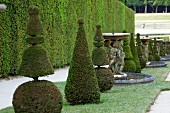 Topiarised boxtrees and a fountain in the Garden of the Palace of Versailles