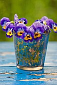 Violas in drinking glass on wooden surface with peeling paint