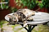 Katze liegt auf Holz Gartentisch