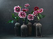 Red and white dahlias in dusty bottles