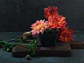 Still-life arrangement with dahlias