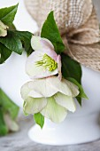 Pale pink hellebores decorating china bowl