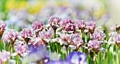 Flowering iris (detail)