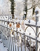 Small bags of biscuits hanging on snowy fence as Advent calendar
