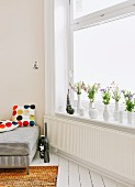 Flowers in collection of white vases on windowsill; partially visible sofa with scatter cushions to one side