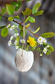 Daisies and dandelion flower in egg shell