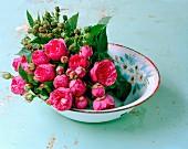 Roses and sprigs of unripe blackberries in bowl