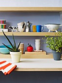 Detail of kitchen counter; potted aloe and herbs in front of retro crockery on wooden wall-mounted shelves