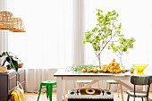Vase of leaves and lemons arranged on rustic wooden table in front of window with airy curtains