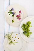 Still-life arrangement of medicinal and tisane herbs on three plates; verbena, red clover, lady's mantle, yarrow flowers, chamomile flowers