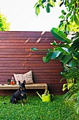 Urban garden with wooden screen - dog on lawn in front of garden bench and green metal watering can