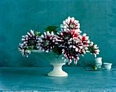 Bicolour dahlia flowers in white dish