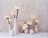 White ranunculus in white vases