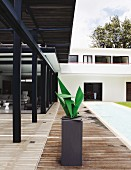 Sculpture on plinth on roofed wooden terrace of contemporary house