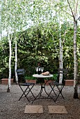 Birches around seating area with black metal chairs and round bistro table on gravel terrace in garden