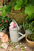Zinc watering can filled with scented roses