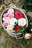 Roses floating in zinc tub