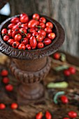 Rosehips in rusty iron vase