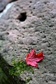 Autumn leaf on stone wall