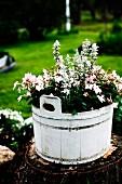 Weiss lackierter Holzzuber mit blühenden Blumen auf Baumstumpf im Freien