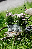 Lilac-flowering plant in zinc pots on vintage bicycle trailer outside
