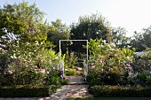 Paved path with small gate between rose beds in sunny garden