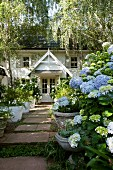 Blue hydrangeas and potted white petunias, azaleas and echeverias lining a paved path leading to a traditional house