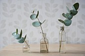 Sprigs of leaves in small, vintage glass bottles against wall with delicate pattern of leaves