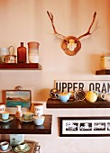 Vintage arrangement of pastel, 50s crockery on wooden shelves, antlers and pictures on wall