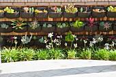 Plants grown in nursery; Valencia; California; USA