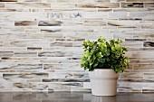 Grünpflanze im Topf vor gefliester Wand
