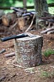 Baumstumpf mit Axt im Wald