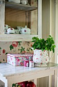 Basil in floral jug on marble-topped table below glass-fronted cabinet on wall