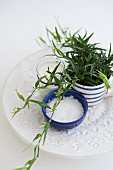 House plant and sugar in simple, Scandinavian ceramic pots on serving plate with embossed pattern