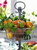Autumnal arrangement of ornamental squash, ivy and berries on wire stand on table