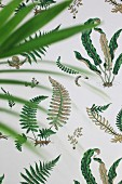 Wallpaper with pattern of various ferns