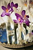 Perfume bottles used as miniature vases for crocuses