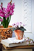 Potted hyacinths & African violets