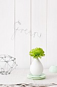Green Chrysanthemum 'Anastasia' in white vase and bent wire spelling the word 'Green'