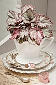 Kaffeefilterbehälter aus weisser Keramik mit Begonie 'Mikado' bepflanzt
