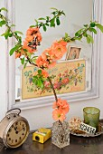 Branch of salmon pink flowering quince (Chaenomeles) in small crystal vase in front of mirror decorated with nostalgic postcards and various vintage objects on metal cabinet