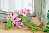 Pink snapdragon (Antirrhinum) in front of old patinated mirror